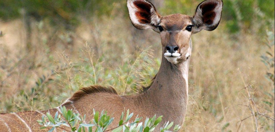 Families are bound to enjoy travelling to the Okavango Delta