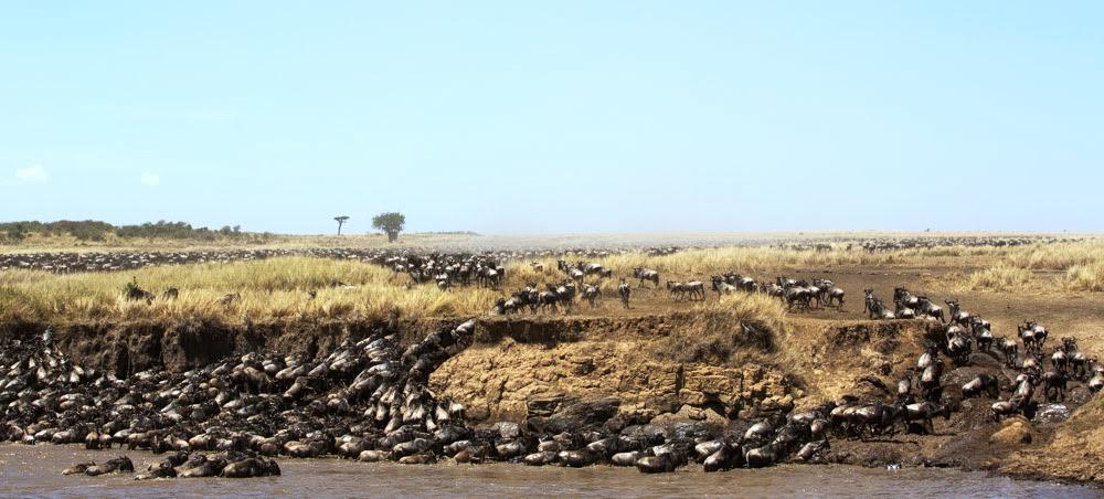 great-migration-tanzania