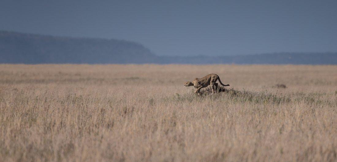 best-tanzania-safari