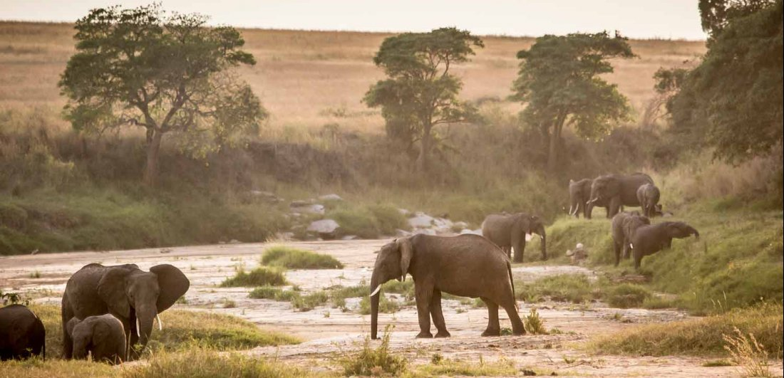 kenya-safari-holidays
