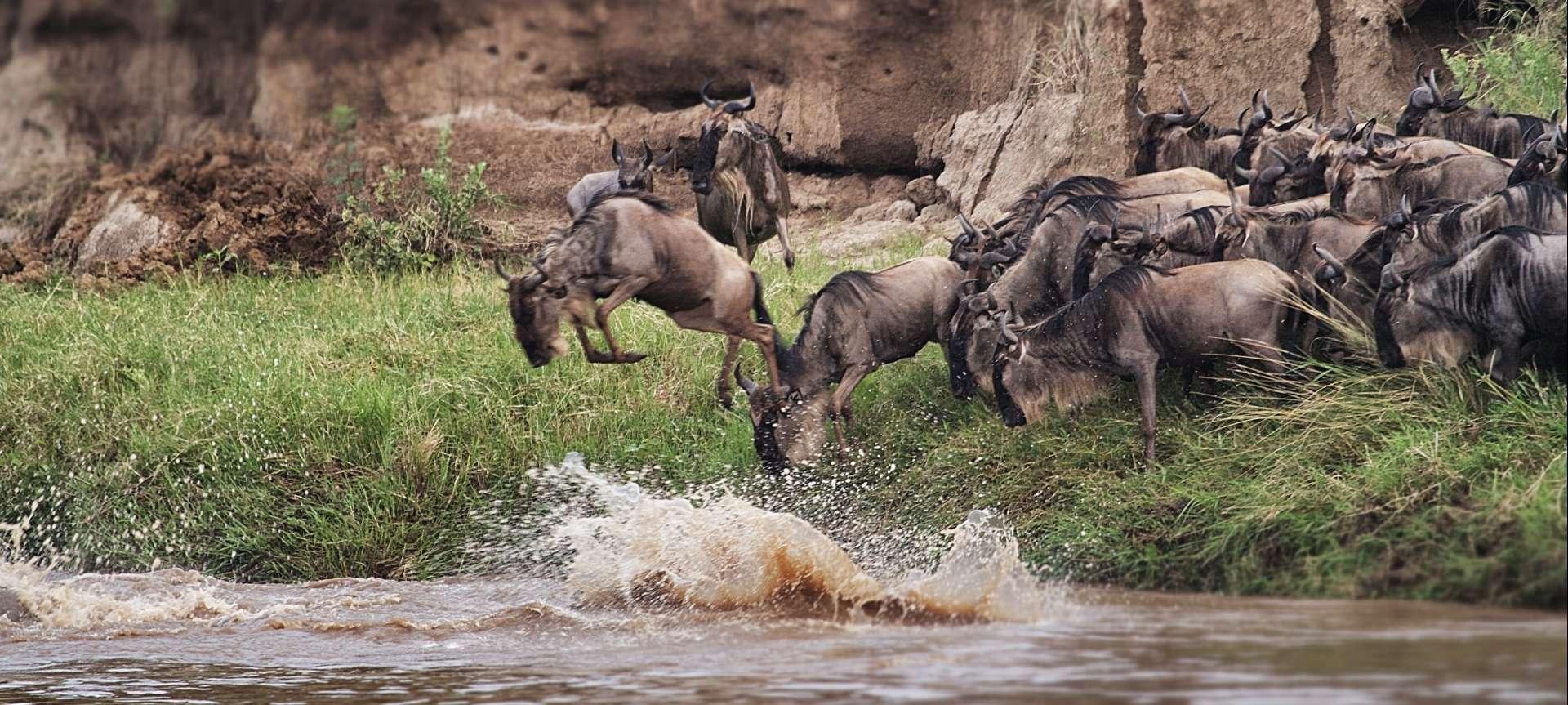 Great Migration Serengeti Tours