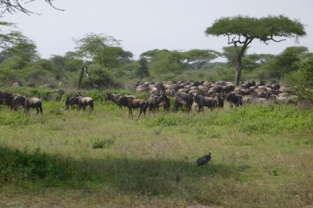 good-numbers-around-the ndutu-marshes