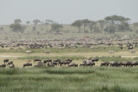 rain-has-returned-to-ndutu