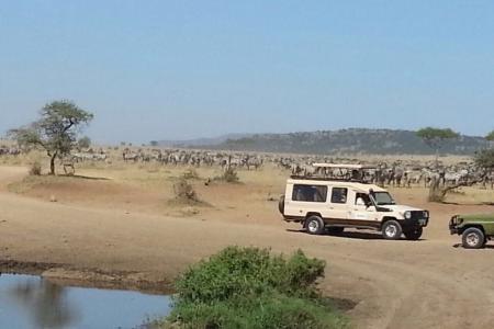the-herds-in-seronera-and-lobo