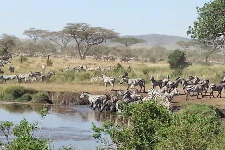 zebra-close-to-a-waterhole