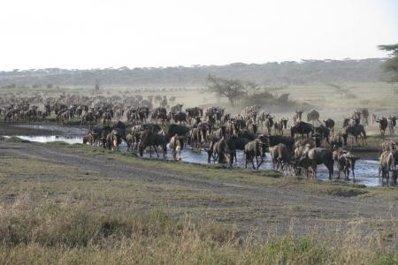 migratory-wildlife-on-the-move