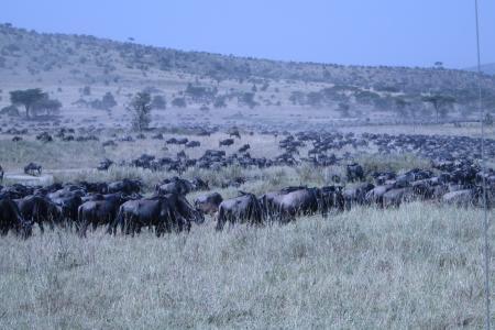 the-herds-are-at-the-moru-kopjes-and-lake-magadi