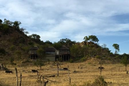 wildebeest-outside-the-four-seasons-safari-lodge