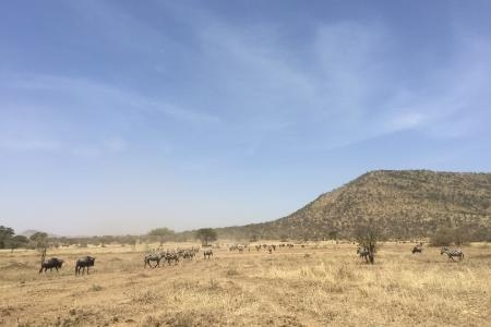 the-central-serengeti-is-drying-out