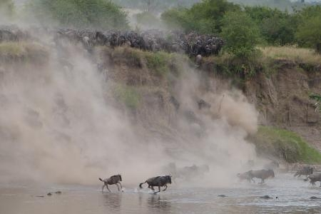 wildebeest-migration-river-crossings