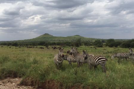 zebra-between-seronera-and-banagi