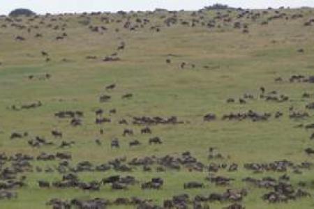 more-than-400000-wildebeest-north-of-nyamalumbwa-plains