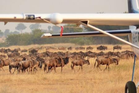 wildebeest-at-the-kogatende-airstrip