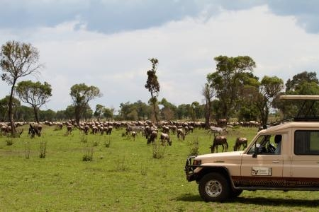 wildebeest-migration-close-to-lemala-mara