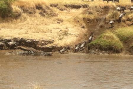 wildebeest-migration-crossing-the-mara-river