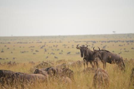 herds-at-rhino-ridge