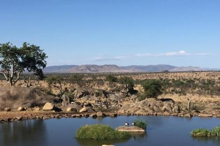 small-herd-around-the-waterhole-at-the-four-seasons