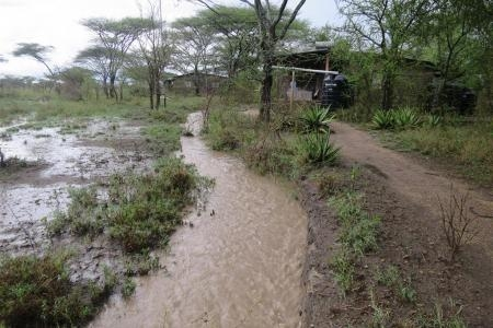 Heavy rain in Ndutu