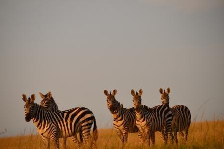 The Loita migration in Naboisho