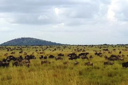 The wildebeest migration close to Mbalageti