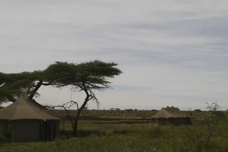The migration surrounding the Namiri Plains Camp
