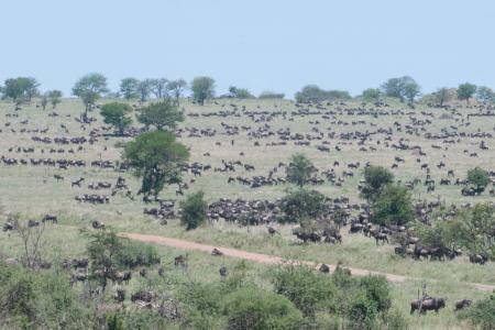 The herds around the Four Seasons Serengeti