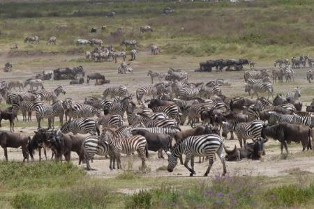 The herds in the Hidden Valley
