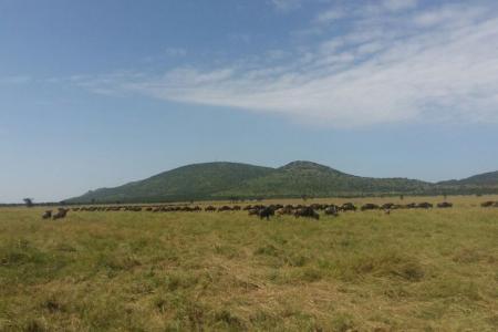 Great migration sightings near Hembe