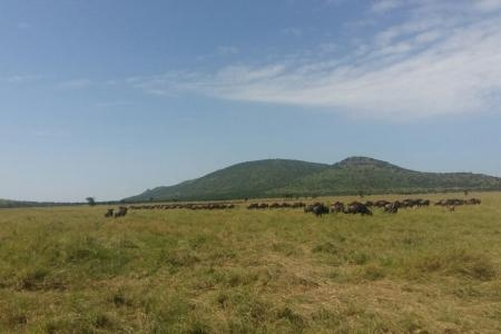 Herds arriving on Togoro Plains