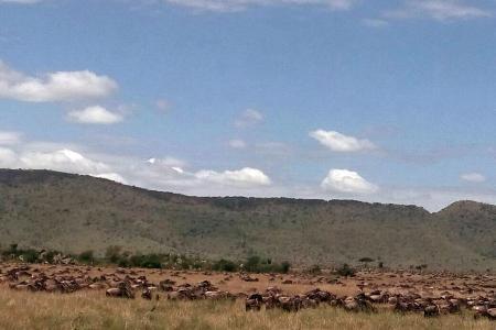 Wildebeest migration passes Kananga Special Tented Camp