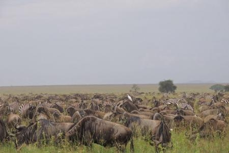 Other herds are already scattered around Musabi Plains