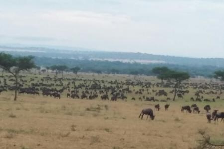Herds spotted 16km from Mbalageti