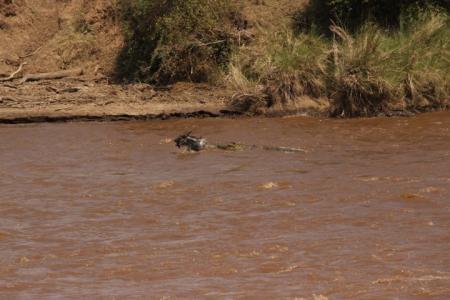 Action at the Mara River