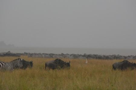 Rain in the northern Serengeti
