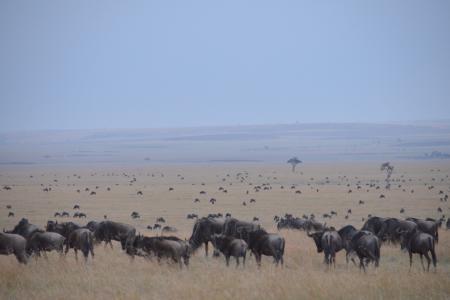 Big herd at Topi Plains