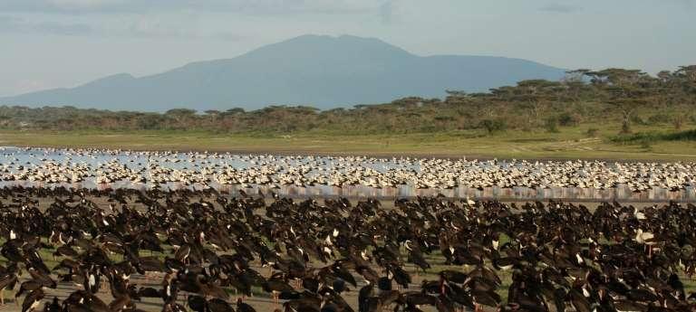 Lemala Ndutu Tented Camp Wildlife in Serengeti National Park