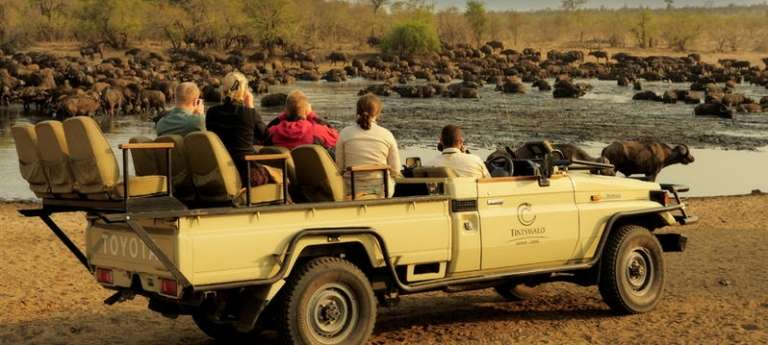 Big Five South African safari