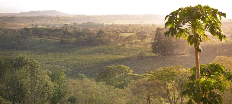Gibbs Farm View in Tanzania