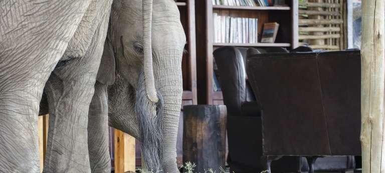 Elephants at Ruckomechi Camp, Zimbabwe