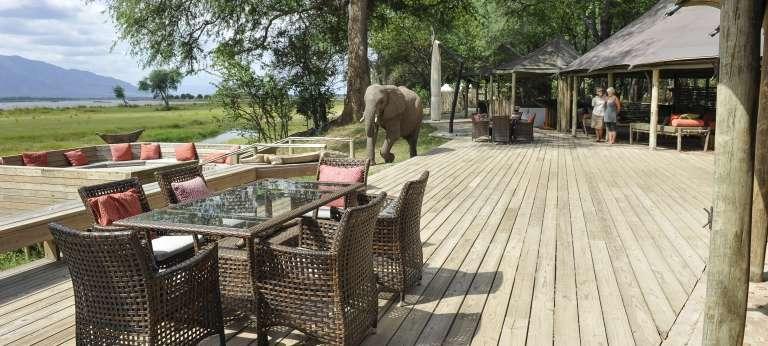 Watching an elephant at Ruckomechi Camp, Zimbabwe