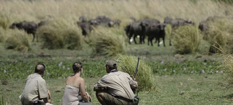 Guests with their guide at Mana Pools National Park, Zimbabwe