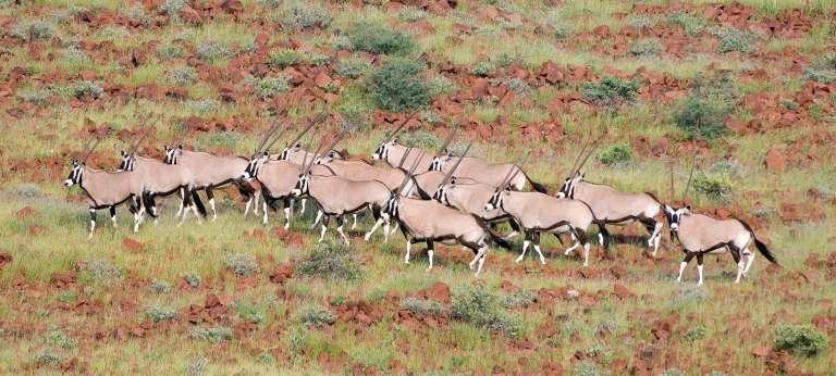 Wildlife at Damaraland Camp in Damaraland