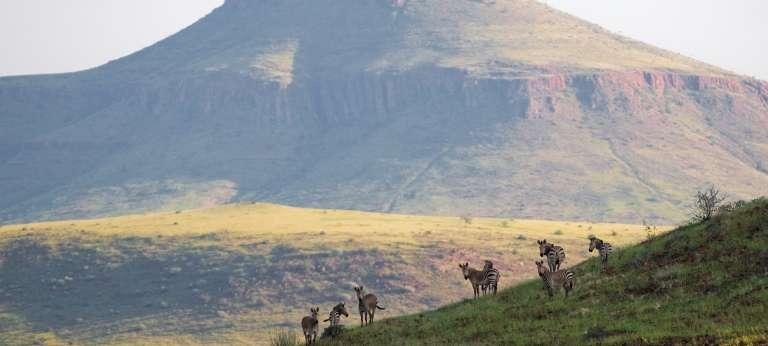 Zebras in Damaraland, Nambia