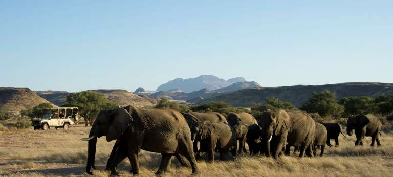 Elephants spotted on Safari in Damaraland, Nambia