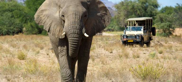 Damaraland Camp Elephant Close Up in Nambia