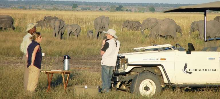 Watching an Elephant on an African safari at Chobe Safari Lodge, Kasane, Botswana