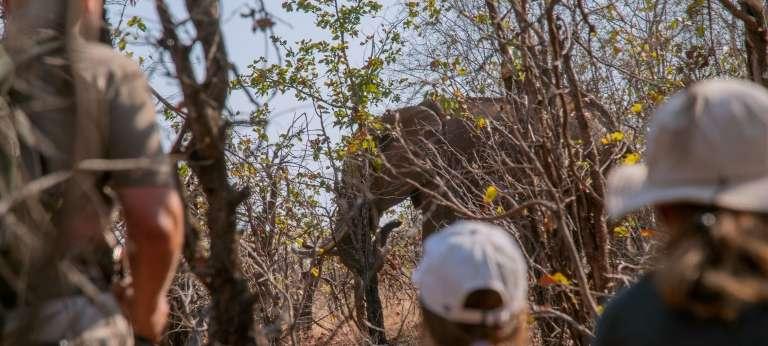 Zimbabwe Water and Wildlife Safari (9 days)