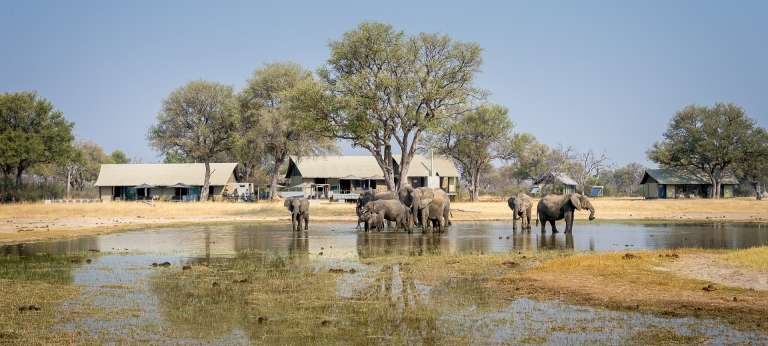 Elephants at Linkwasha Camp in Hwange, Zimbabwe