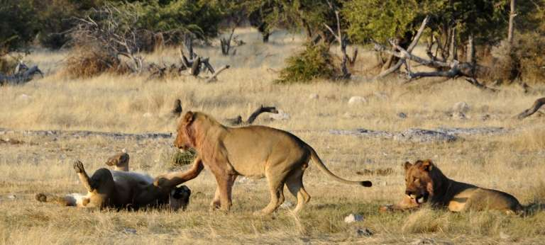 Unforgettable Namibia Safari Adventure (11 days)