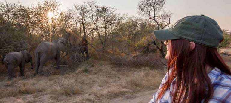nThambo Tree Camp - African Wildlife Safaris